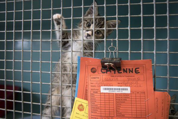 Un jeune chat destiné à l'adoption dans un refuge de la SPA