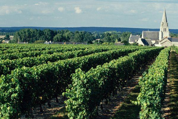 Vignoble du Saumurois en Anjou.