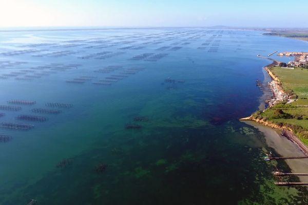 L'eau du bassin de Thau: un sujet sensible.