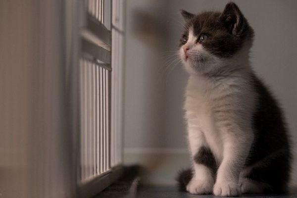 Depuis le début de la crise de coronavirus, les vétérinaires reçoivent des chats avec d'étranges blessures