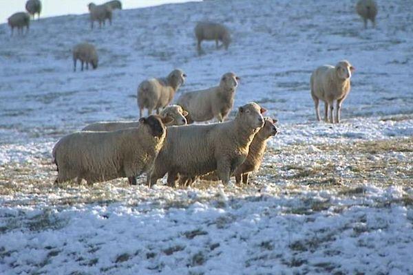 L'élevage de Franck, à Soncourt (88).