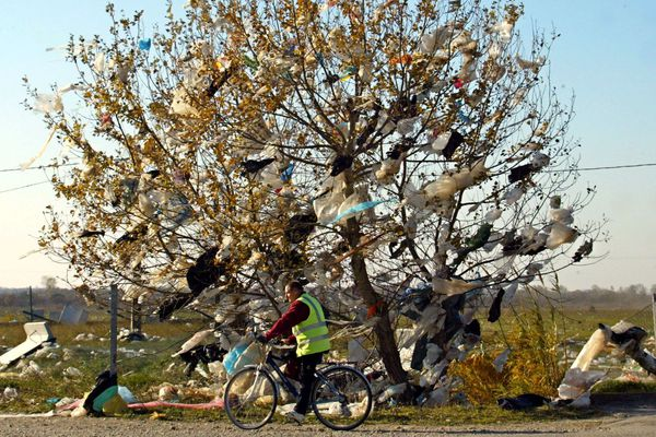 Un arbre recouvert de sacs en plastique, près d'une décharge dans le sud de la France.
