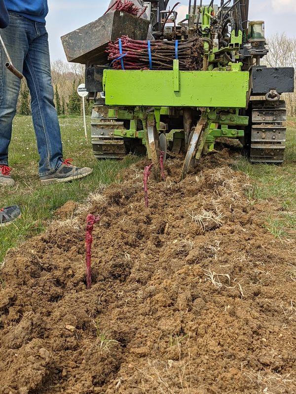 Plantation de vignes à Corcy dans l'Aisne