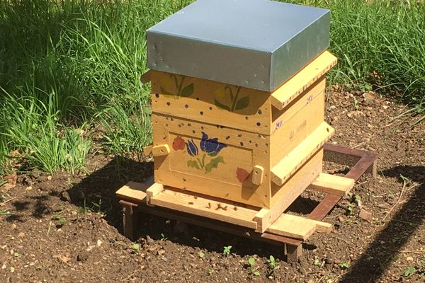Sans être spectaculaire, ni coûteux, la simple installation d'une ruche pédagogique peut amener la future génération à s'engager pour lutter contre la disparition de la biodiversité