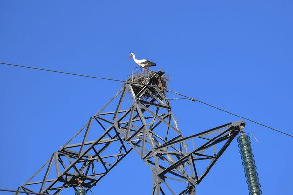 Photo d'illustration. Les cigognes installent souvent leurs nids au dessus des pylônes électriques.