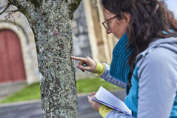 Claire Boucheron se rend régulièrement, au chevet de 385 arbres pour mesurer la qualité de l'air