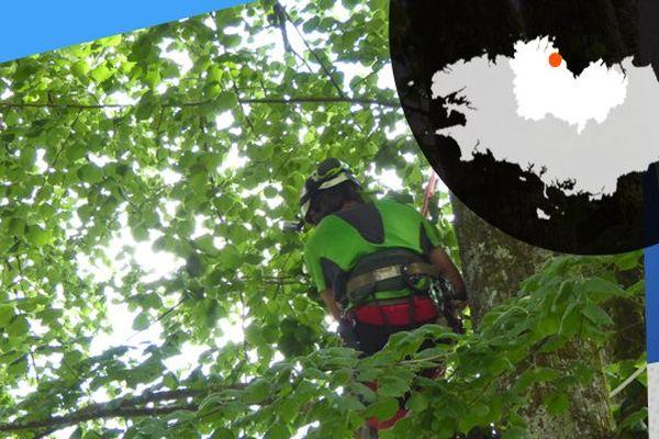 Florian, élagueur dans son arbre perché.