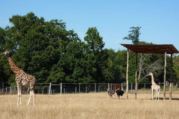 Les parcs animaliers sont fermés depuis fin octobre 2020.