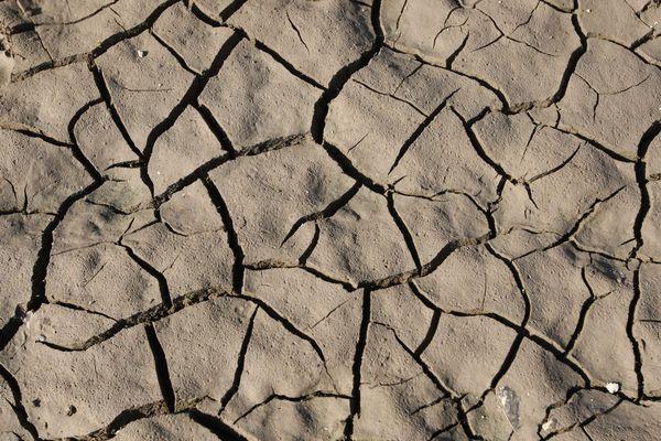 La sécheresse sévit dans le Bas-Rhin. (image d'illustration)