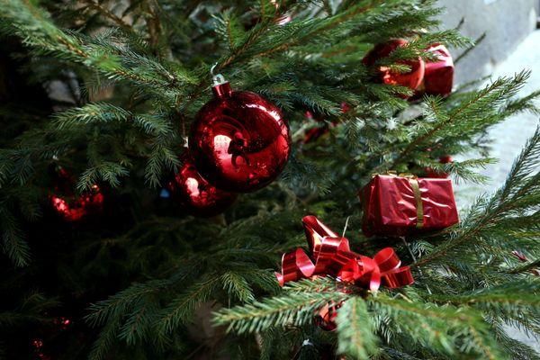 Cette année, les ventes de sapins de Noël sont en hausse.