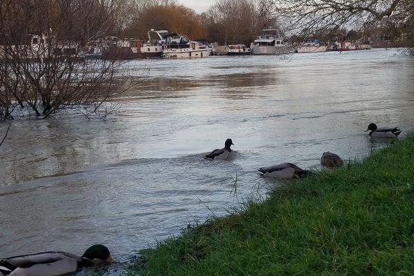 La Marne, au niveau de Noisy-le-Grand ce samedi.