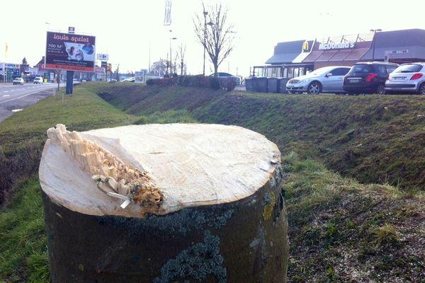 Un arbre coupé devant le Mc Do d'Hazebrouck.