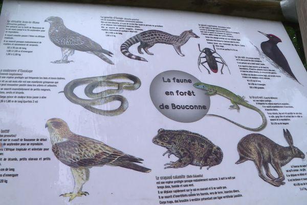 Un panneau montrant aux visiteurs la faune présente en forêt de Bouconne.
