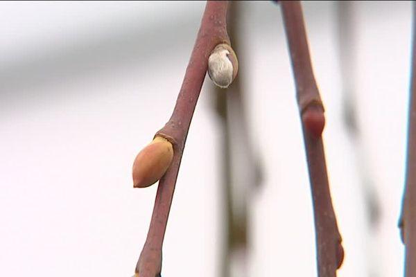 Températures douces et hiver trop sec en Limousin en 2016