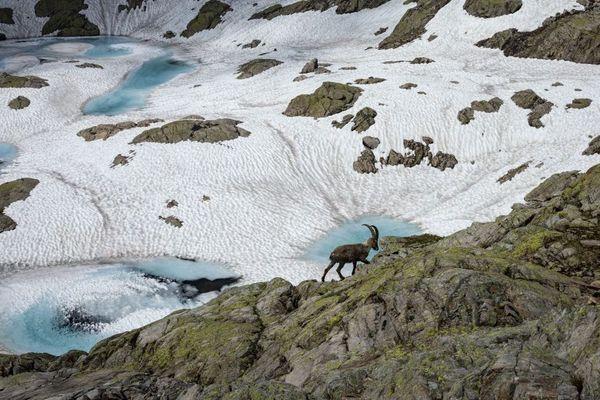 C'est aussi une façon de prendre l'air en ces temps de confinement. Analyser des photos de la faune du massif du Mont-Blanc pour faire avancer la Science.