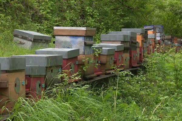 L'absence de fauchage bénéficie directement aux abeilles.