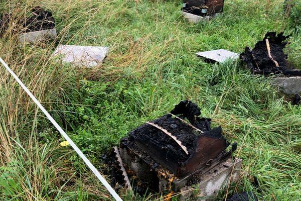 Six ruches ont été incendiées et environ 250 000 abeilles sont mortes