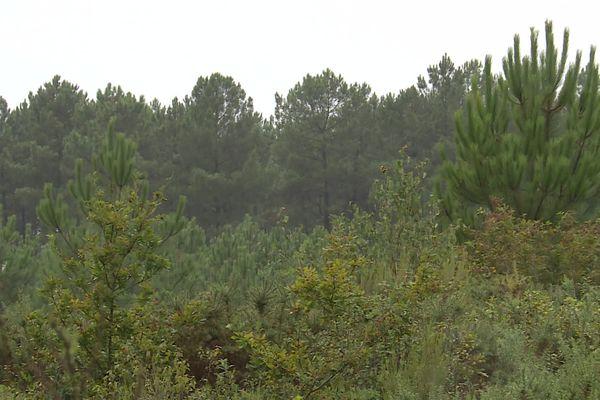 Le projet de plateforme logistique prévoit de s'installer sur un terrain boisé de 19 ha sur la commune de Belin-Beliet en Gironde, dont 13 ha de zones humides.