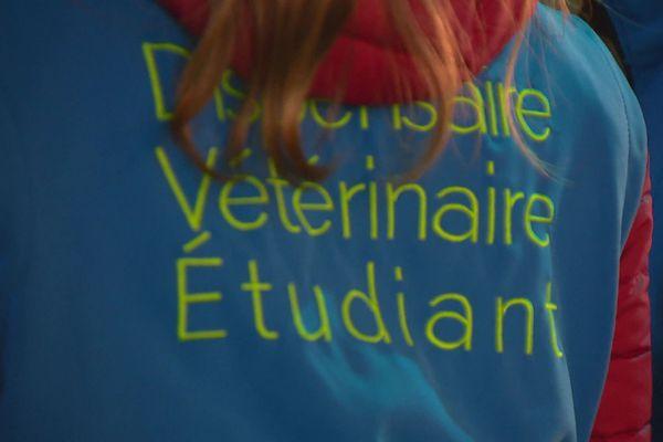Cette année, 125 étudiants et surtout étudiantes de l'école vétérinaire de Lyon ont pris part aux soins aux animaux de la rue et à ces maraudes, dans le cadre de leur association Dispensaire vétérinaire Etudiant
