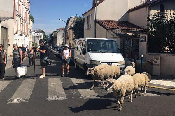 Une vingtaine de moutons sillonnent la métropole du Grand Paris