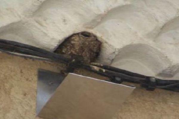 La LPO suggère s'installer des planchettes sous les nids d'hirondelles, pour se prémunir des fientes, et éviter aux petits de tomber.