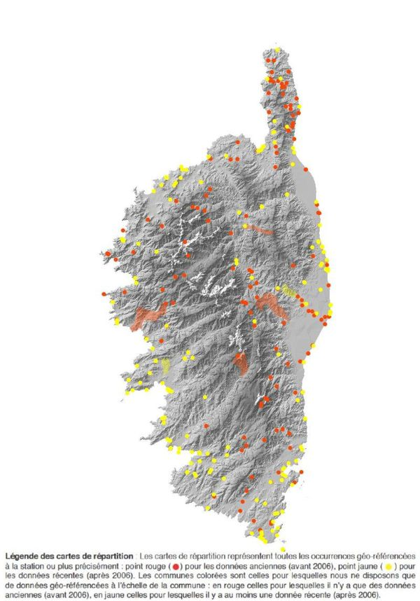 Tapinoma magnum : répartition en Corse.