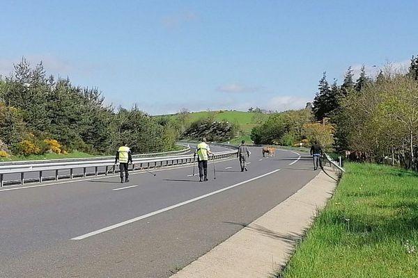 Eleveurs et gendarmes ensemble pour sécuriser l'autoroute et le troupeau.