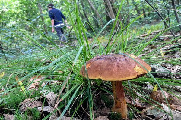 Les bolets sont les champignons les plus répandus en Auvergbe-Rhône-Alpes.