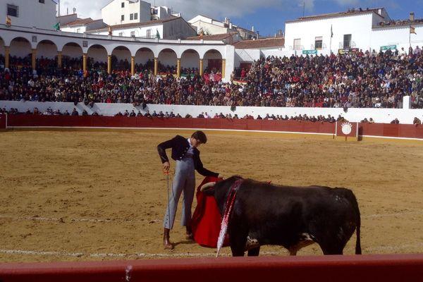 Aracena (Andalousie), 19 février 2017 : Andrés Roca Rey avec un novillo de Manolo González