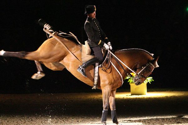 Chevaux et cavaliers du Cadre Noir seront au jumping de Bordeaux