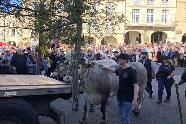 Le défilé dans la ville, les boeufs tiennent la vedette.