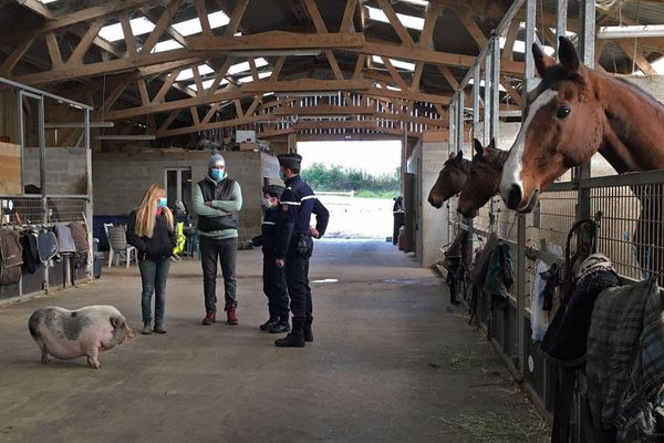 """Novembre 2020 : des gendarmes d'une """"brigade de contact équin"""" chez un propriétaire de chevaux de l'Eure"""