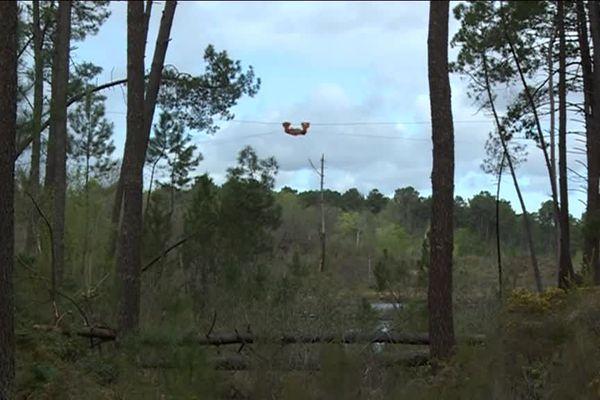 A Hostens, 2000 pins maritimes vont être coupés pour protéger les espèces rares de ce milieu sensible.