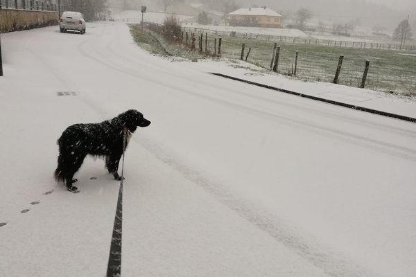 Un promeneur et sa chienne Gina, sous la poudreuse à Wingen.