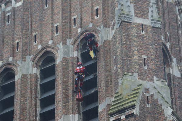 Deux faucons ont été secourus par les pompiers après avoir été pris au piège par les filets, installés à quarante mètres de hauteur sur l'église Saint-Vaast de Béthune (Pas-de-Calais).