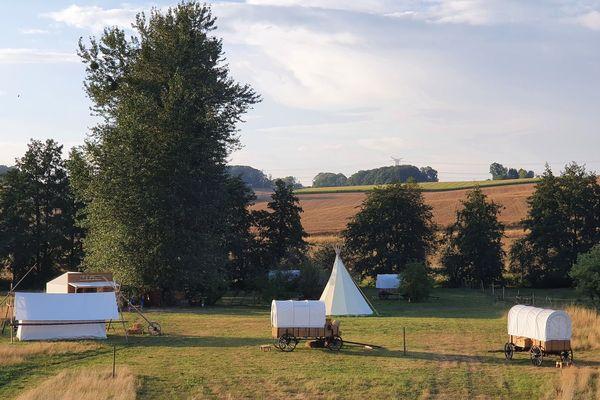 Autour du campement : des vaches et des ânes / Ardennes, août 2020