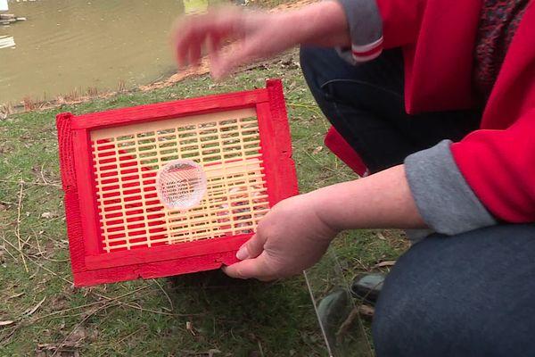 Voici à quoi ressemble un piège à frelons. A l'intérieur un appât, et une entrée conique calibrée à la taille du prédateur
