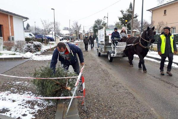 Le ramassage des sapins à Bérat (31) se fait à cheval.