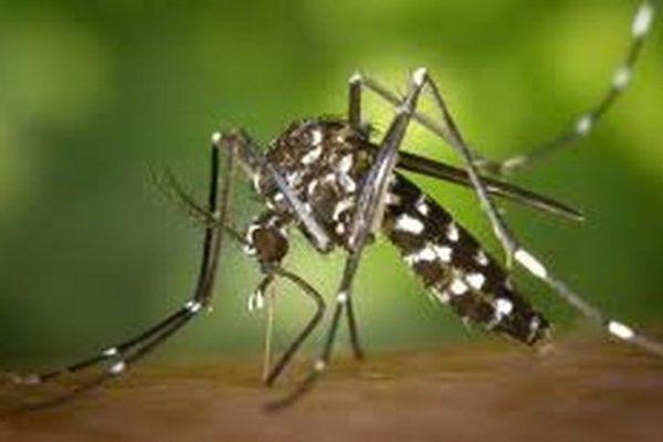 Le moustique tigre encore présent dans les Bouches du Rhône.