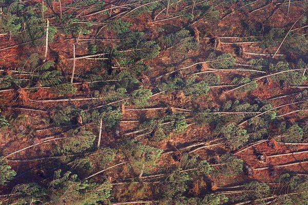 Une parcelle forestière du Médoc après le passage de la tempête Martin en décembre 1999.