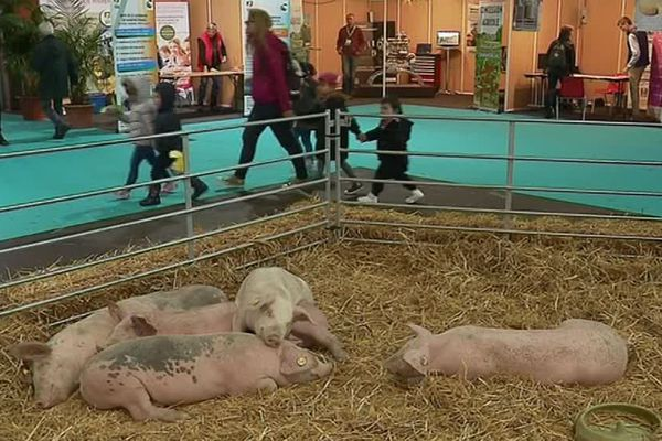 Stands pour présenter les animaux et activités ludiques autour du métier d'agriculteur au programme de la deuxième édition de Balade Ferme jusqu'au 28 avril 2019 à La Rochelle.