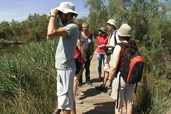 Les chercheurs venus du monde entier ont découvert la biodiversité de la Camargue. Août 2015.