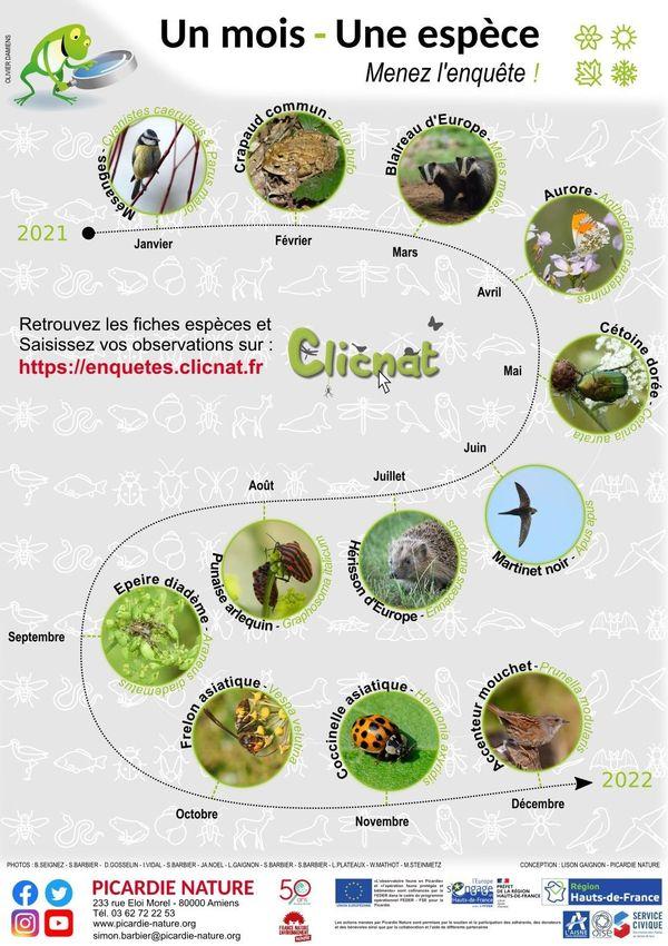 La mésange en janvier, le crapaud en février...Le programme de l'opération Un mois, une espèce de Picardie nature est déjà défini.