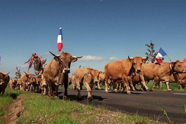 Chaque année, les visiteurs sont nombreux à venir assister à la montée en estive.