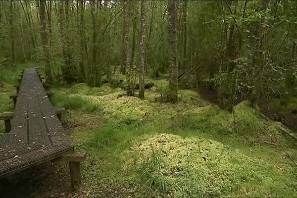 Forêt des mousseuses à la Ferté-Vidamme en Eure-et-Loir
