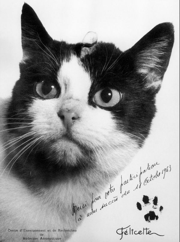 Dédicace de Félicette, 18 Octobre 1963