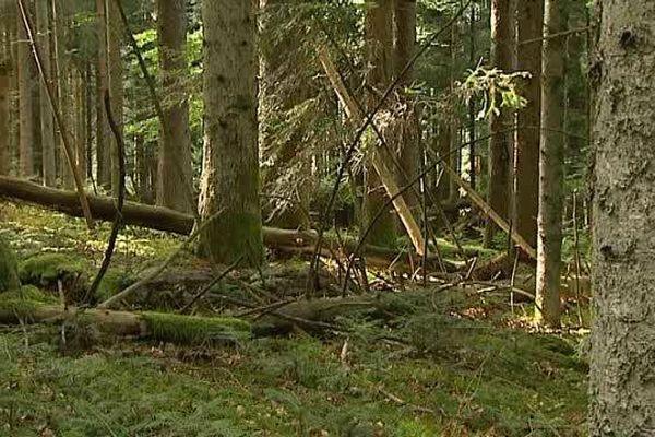 Près de 5000 propriétaires privés détiennent les bois et forêts du Pays d'Arlanc (63). Certains, souvent des héritiers, ne savent même pas qu'ils possèdent des bois. Leurs parcelles restent à l'abandon. Un souci pour exploiter le potentiel de cette précieuse zone.
