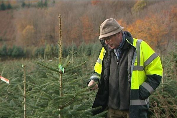 Quelque part au milieu de 500 hectares de sapins prêts à être vendus pour Noël.