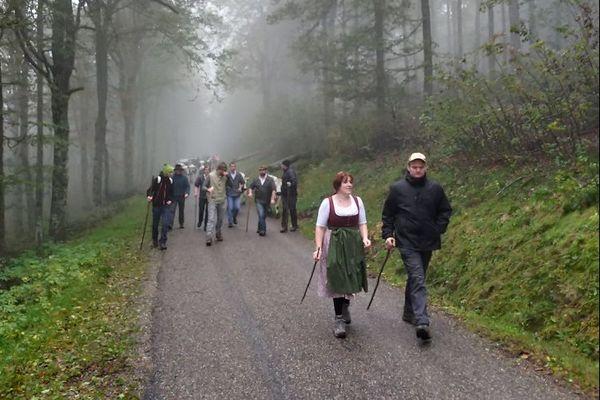 Un cortège de vaches vosgiennes, de marcaires et d'amis quittent les chaumes de Schmargult.