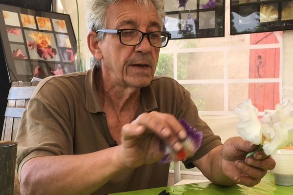 Christian Leydet fait la pollinisation qui se fait à la main avec des variétés choisies en vue d'une hybridation